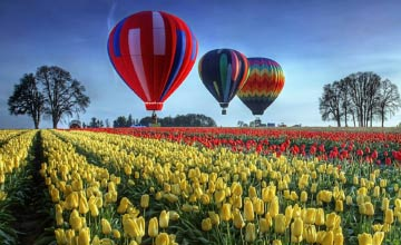 Hot Air Balloon Rides Hamilton